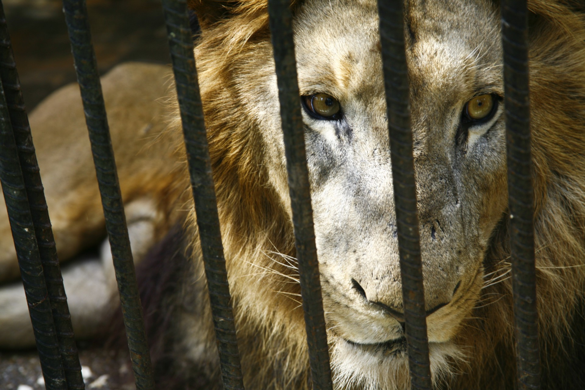 animals in captivity Animals behind cages, starving and dying, is an awful sight it's an image that underlines the callousness with which humans treat other creatures and indeed themselves.