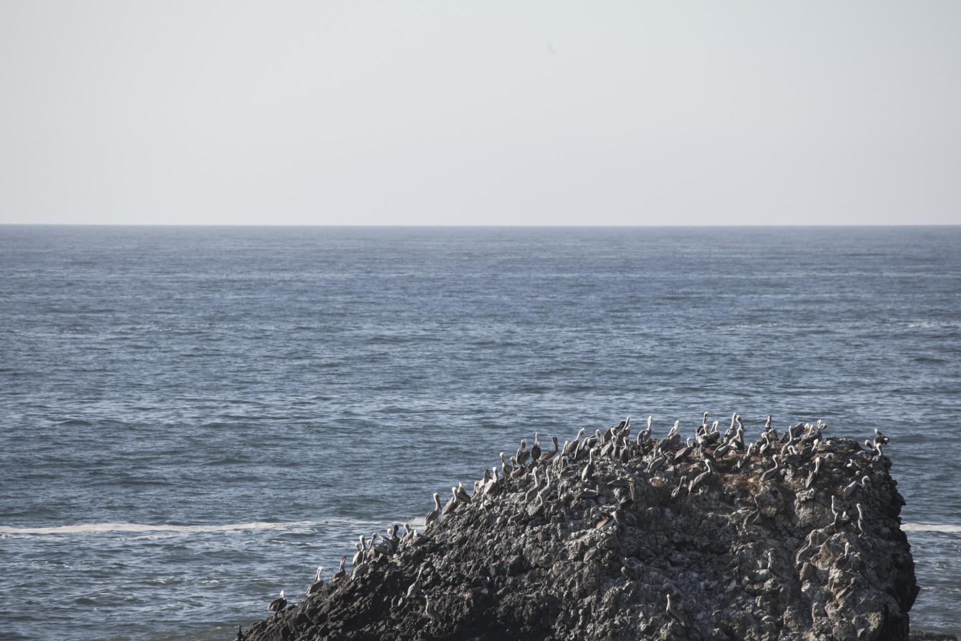oregon coast-06