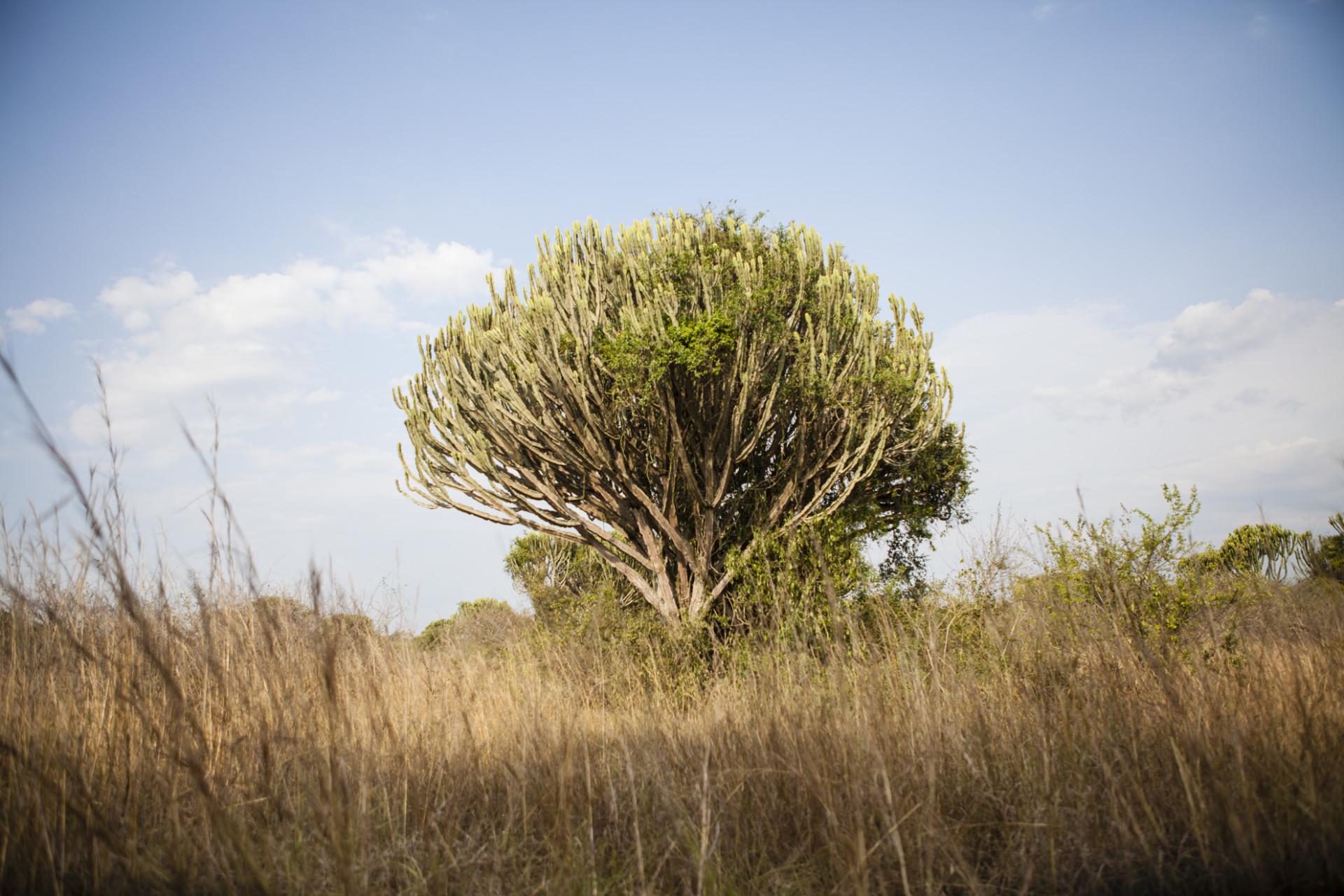 uganda-roadtrip-010