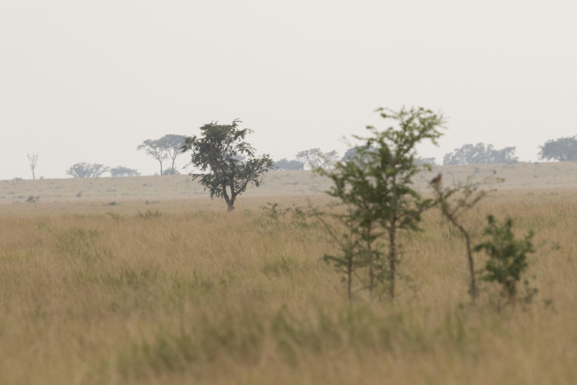 uganda-roadtrip-011
