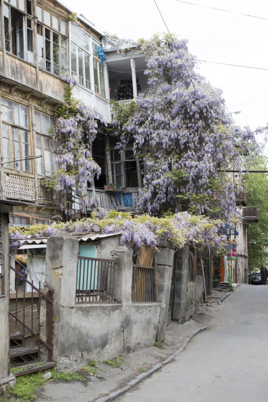 georgia-081